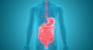 digestive tract 3D illustration
